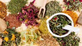 Травы для восстановления печени: растения для очищения организма