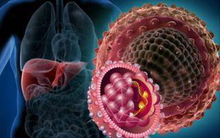 Носитель гепатита С: что такое пассивное состояние вируса гепатита
