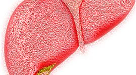Как восстановить и поддержать печень при гепатите С