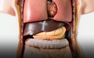 Заболевания печени: симптомы у мужчин и женщин