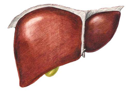 Лечение хронического гепатита В