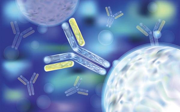Виды антител к гепатиту