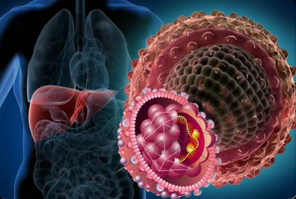 Носитель гепатита С
